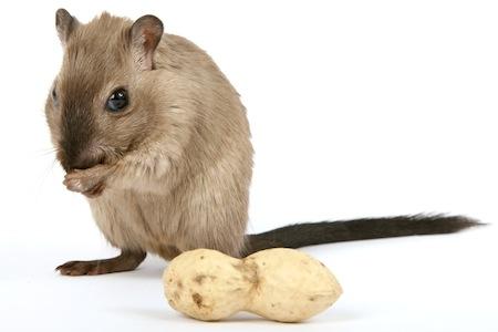 ネズミ 2