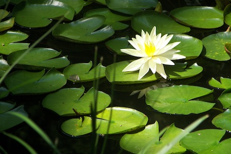 using chlorine to purify pond water