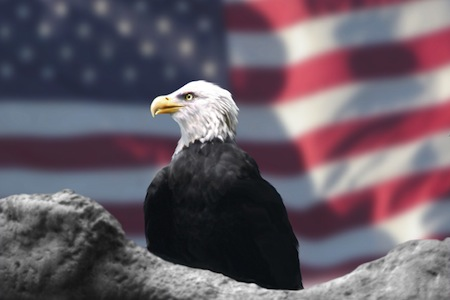 The American Bald Eagle represents freedom
