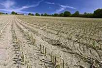 monoculture row farming