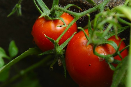 raising your own food for self sufficiency