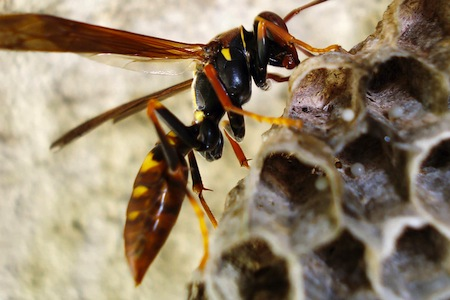 It's not good to aggravate a wasp's nest